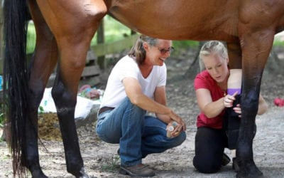 Meet Donna Stedman of Henry's Home Horse and Human Sanctuary in Conroe
